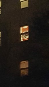 Nazi flag proudly hung on 271 Lester
